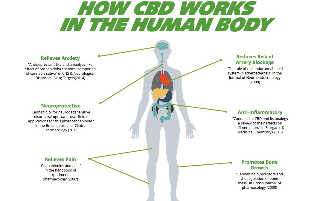 CBD Benefits – Research into Cannabidiol (CBD) as an Alternative Therapy